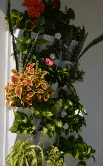 16 nas zidni vrt nakon  40 dana -hidrokultura